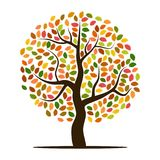 Autumn tree with yellow, orange, brown and green leaves Royalty Free Stock Photography
