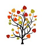 Autumn tree Royalty Free Stock Photos