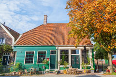 Autumn tree with Zaaneschans city townhome. The Netherlands Royalty Free Stock Images