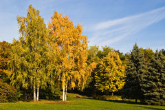 Autumn trees Royalty Free Stock Photos