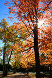 Autumn trees. Bright colors of autumn trees in the park royalty free stock photos