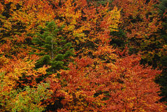 AUTUMN TREES. Group of colorful trees in autumn park royalty free stock image