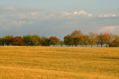 Autumn trees. Trees and field in a sunny autumn day Stock Photography