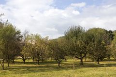 Autumn trees. In Europe, Croatia Stock Photography