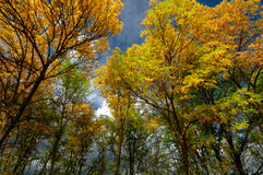 Autumn trees. Coloured in yellow, red, green, orrange with view of rainy clouds Royalty Free Stock Photos