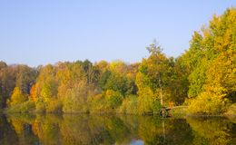 Autumn trees. Reflected in water stock images