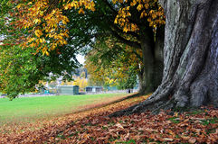 Autumn Trees. Colourful Autumn Leaves on a Row of House Chestnut Trees Stock Photo