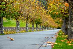 Free Autumn Trees Stock Images - 14693264