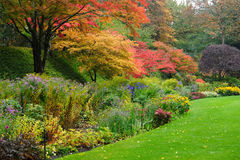 Autumn trees Stock Photos
