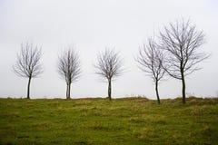 Autumn trees. Autumn five trees west Ukraine Royalty Free Stock Photos