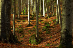 Free Autumn Trees Royalty Free Stock Photography - 1739757