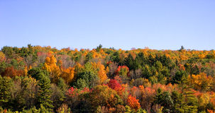Autumn Trees. Fall Treetops royalty free stock image