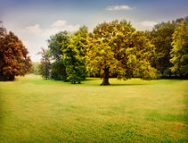 Autumn trees. With beautiful pastel colors. Nature landscape background with green meadow and trees in fall Royalty Free Stock Photography
