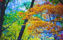 Autumn trees. Bright multicolored autumn trees in the wild royalty free stock images