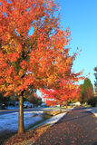 Autumn Trees. With white snow on ground royalty free stock photography