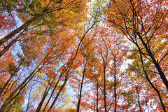 Autumn trees. Low angle view stock photos