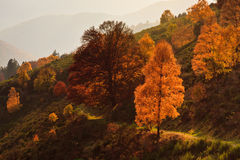 Autumn trees. Sunny autumn trees in the French province of Alsace Royalty Free Stock Image