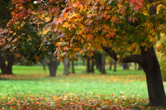 Autumn trees. Close up autumn trees in park Royalty Free Stock Photography