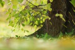 Autumn trees. Close up autumn trees in park stock photos