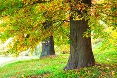 Autumn trees Stock Photo