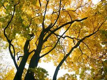 Autumn Trees. Coloured Leaves Stock Images