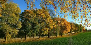 Autumn trees. In yellow color Stock Photos