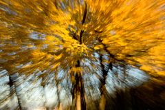 Autumn trees. Autumn Elm trees photographed with movement stock photo