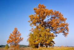 Autumn trees. Autumn landscape - group of trees with vivid leaves stock images