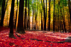Autumn Trees Image stock