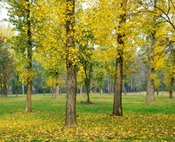 Autumn trees. At the park in November stock photos