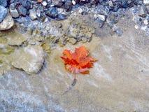 The Autumn. Of the trees stock photo