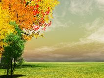Autumn trees. Beautiful landscape with colorful autumn trees royalty free stock photography