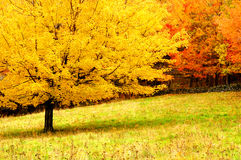 Autumn Trees. Brilliant autumn trees in Grayson Highland State Park Virginia Stock Photos