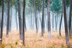 Free Autumn Trees Stock Photography - 6486742