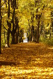 Autumn trees. Beautiful autunm with lots of colours leaves Royalty Free Stock Photo