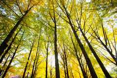Autumn trees. The fall trees with beautiful colors Royalty Free Stock Image