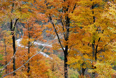 Autumn trees. Colorful trees in the autumn Royalty Free Stock Images
