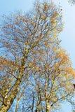 Autumn trees Stock Photography