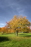 Autumn trees. Near erlangen in germany Royalty Free Stock Image