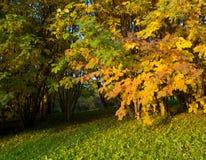 Autumn trees royalty free stock image