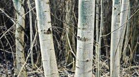 Free Autumn Trees Stock Image - 7585921
