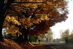 Autumn Trees. Beside country road Stock Image