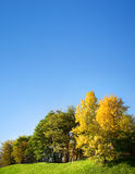 Autumn trees Royalty Free Stock Images