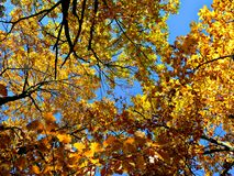 Autumn trees against the blue sky royalty free stock photography