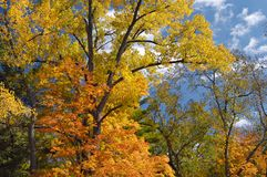 Autumn Trees Against Sky Royalty Free Stock Photos