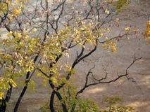 Autumn Trees Against un mur urbain de stuc de bâtiment Images stock