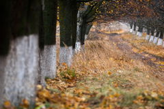 Autumn trees alley Royalty Free Stock Image