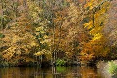Autumn trees along the pond Stock Photos
