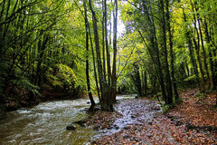 Autumn Trees along the River Alyn, Rhydymwyn Stock Photos