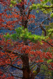 Autumn Trees 2 Stock Images